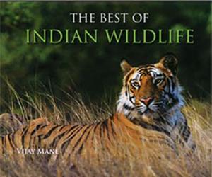the best of indian wildlife