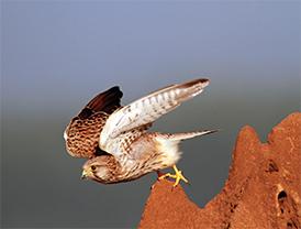 D-(22_14_The-Bird-watcher)2