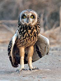 D-(22_14_The-Bird-watcher)3