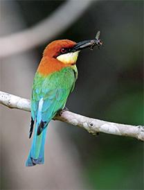 D-(22_14_The-Bird-watcher)4