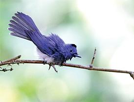 D-(22_14_The-Bird-watcher)5