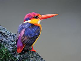 D-(22_14_The-Bird-watcher)6