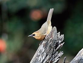 D-(22_14_The-Bird-watcher)7