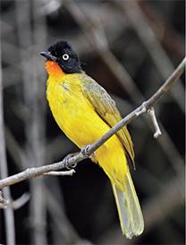 D-(22_14_The-Bird-watcher)8