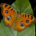 An App to recognise butterflies around Mumbai and Thane