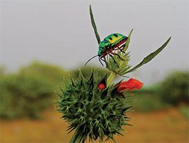 L(10_2015_A-Bird-Guide-at-Bhigwan)2